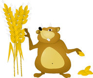Hamster grains. Brown hamster collects grains on a white background Stock Photo