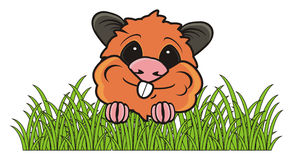 Hamster in the grass Stock Photo