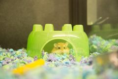 Hamster in a green hideaway. In a pet store cage royalty free stock photos