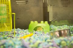 Hamster in a green hideaway. In a pet store cage royalty free stock image