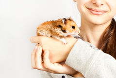 Hamster in the hands of a girl Stock Photos