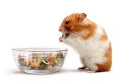 Hamster het eten Stock Foto's