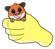 Hamster holding in the hand Royalty Free Stock Photo
