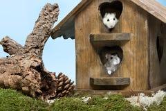 Hamster house Stock Photos