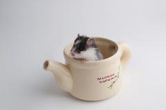 Hamster i en kruka Arkivfoto