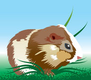 Hamster illustration Stock Photos