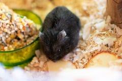 Hamster im K?fig stockbild