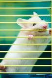Hamster im Rahmen Lizenzfreies Stockfoto