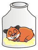 Hamster lie in a glass jar. Brown hamster is asleep in a glass jar Royalty Free Stock Photography