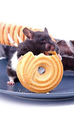 Hamster likes cakes Royalty Free Stock Images