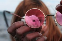 Hamster looking through rose-colored glasses royalty free stock photo