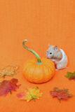 Hamster Looks at Pumpkin Royalty Free Stock Photo