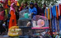 Hamster Stock Photo