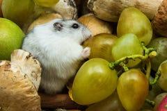 Hamster met druiven en paddestoelen Royalty-vrije Stock Afbeeldingen