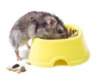 Hamster met kom Stock Afbeeldingen