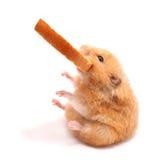 Hamster mit Brot Stockbilder