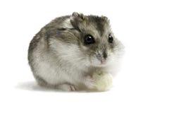 Hamster mit Brot stockfotografie