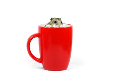 Hamster in a mug Royalty Free Stock Photography