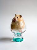 Hamster no vidro Imagem de Stock Royalty Free