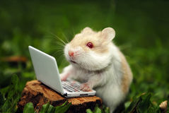 Hamster at office Royalty Free Stock Photo