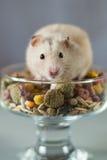 Hamster onder gekleurd Voedsel voor knaagdieren op een grijze achtergrond Stock Afbeeldingen