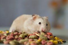 Hamster onder gekleurd Voedsel voor knaagdieren op een grijze achtergrond Stock Foto's