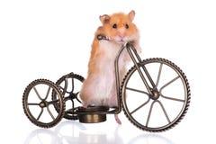 Hamster på en cykel Arkivfoto