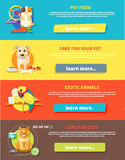 Hamster, papegaai, kat en hond Royalty-vrije Stock Foto