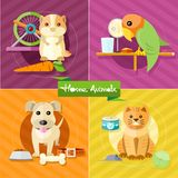 Hamster, parrot, cat and dog. Icon set with home animals silhouettes of pets on multicolor stylish banners. Hamster, parrot, cat and dog in flat design cartoon Royalty Free Stock Photos