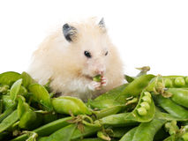 Hamster and peas Stock Photography