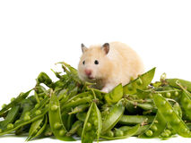 Hamster and peas Stock Image