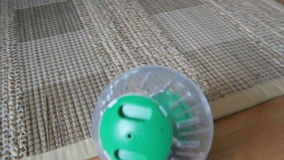 hamster pet in wheel, plastic ball inside home stock video