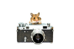 Hamster with photocamera. Little hamster with retro photocamera stock image