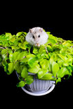 Hamster on a plant Stock Photography
