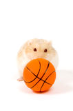 Hamster is playing with basketball (focus on ball). Little hamster is playing with basketball (focus on ball) isolated on white stock photography