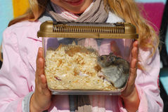 Hamster in portable transporter Stock Photo