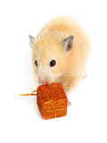 Hamster with present Royalty Free Stock Photography