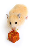 Hamster with present Royalty Free Stock Images