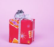 Hamster with present Stock Images