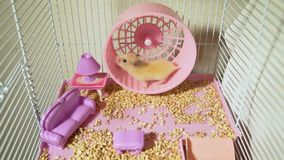 Hamster Running on a Wheel in a Cage