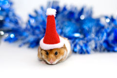 Hamster in santa hat. Hamster in santa claus red hat Royalty Free Stock Images