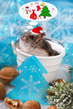 Hamster in santa hat dreaming about christmas Royalty Free Stock Images
