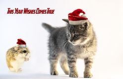 Hamster with Santa hat praying to the cute gray cat