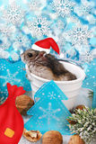 Hamster in santa hat waiting for christmas Royalty Free Stock Image