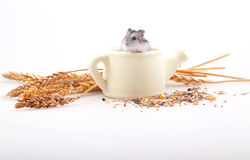 The hamster sits in a white teapot in an environment of ears on. A white background stock photography