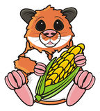 Hamster sitting and holding a corn Royalty Free Stock Images