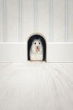 Hamster standing in his lair Stock Image