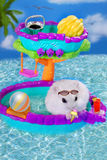 Hamster on summer holidays Stock Image
