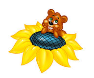 Hamster sunflower flower Stock Photography
