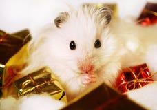 Hamster syrien avec des cadeaux de Noël. Photo stock